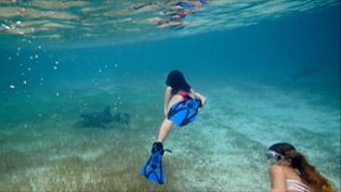 Schnorcheln mit Ammenhaie auf den Bahamas