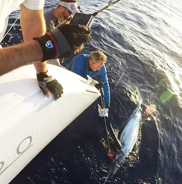 Riesen Marlin gefangen auf den Atlantischen Ozean mit Kapitän Craig Doring aus